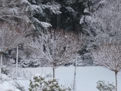 sonnenhof-tuin-sneeuw
