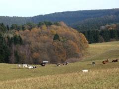 eifel-heuvellandschap-herfst