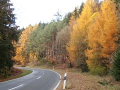 herfstwandeling-birresborn-eifel