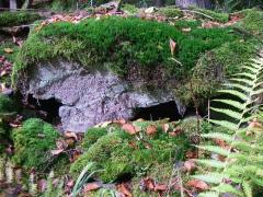 herfstwandeling-birresborn-eifel18
