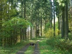 herfstwandeling-birresborn-eifel19