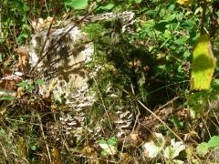 herfstwandeling-birresborn-eifel66