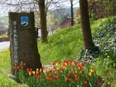 lentewandeling in de Duitse Eifel