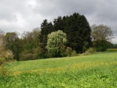 20Lentewandeling Duitse Eifel