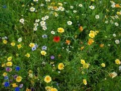 08prum-bloemetjes-klaproos425