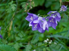 02birresborn-boswandeling-bloemen-paars617