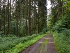 08birresborn-boswandeling-weg-bomen615