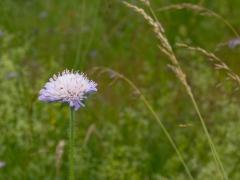 09birresborn-boswandeling-bloem453