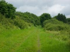 10birresborn-boswandeling-groen-gras602