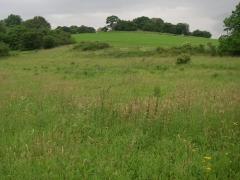 11birresborn-boswandeling-grasveld