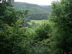 12birresborn-boswandeling-dal