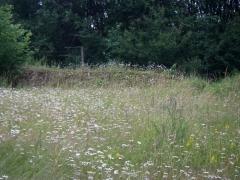 13birresborn-boswandeling-bloemenveld