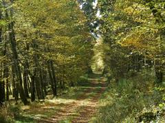 Traumhafte Herbstwanderung in der Eifel