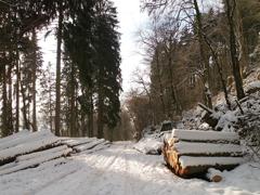 wandeling winterlandschap